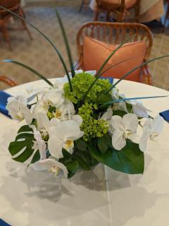 White Phales and Green Hydrangea