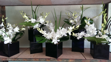White orchids black cube
